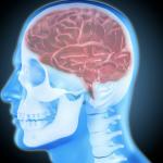 Das Geheimnis der Spiegelneuronen