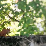 Eichhörnchen-Pausen :)