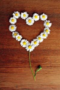 gaensebluemchen_daisy-1403132_640_pixabay