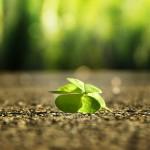 Gewohnheit - Glückssaboteur und Glückszutat zugleich